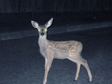 [Image: deer-in-headlights.jpg]